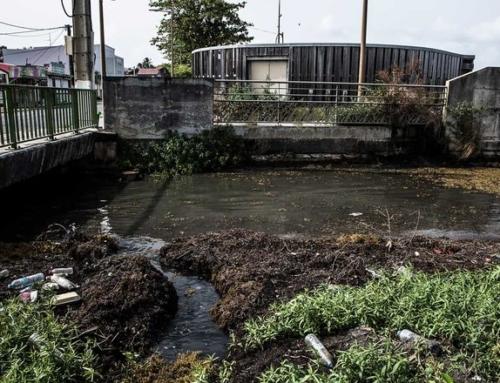 Guadeloupe : l'archipel saccagé par les eaux usées (Mediapart)